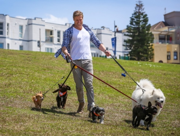 strolling-with-dogs.jpg
